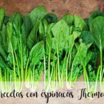 30 recipes with spinach with thermomix